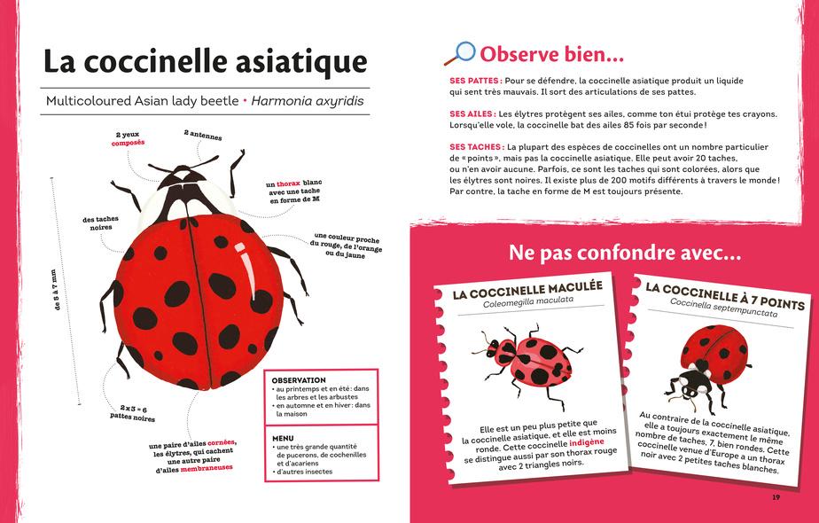 Extrait des Bestioles d'ici, texte de Karine Morneau, illustrations de Valérie Desrochers
