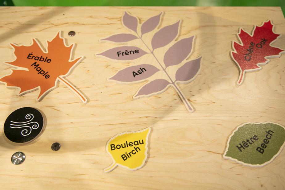 I bambini possono conoscere le foglie dell'albero prima di farlo esplodere con un ventilatore.