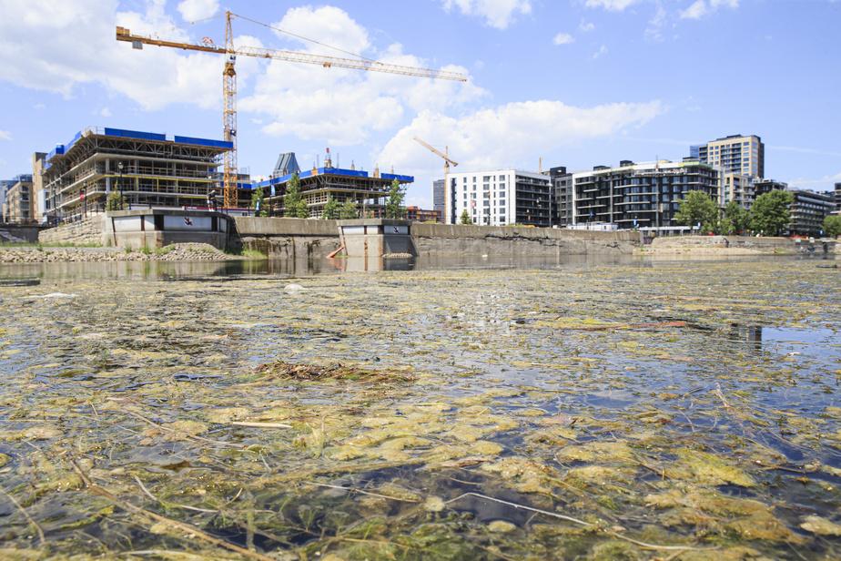 «Les algues se sont formées à cause du faible niveau d'eau. L'eau était stagnante, et il a fait très chaud à cause des canicules», explique Audrey Godin-Champagne, agente de communications à Parcs Canada.