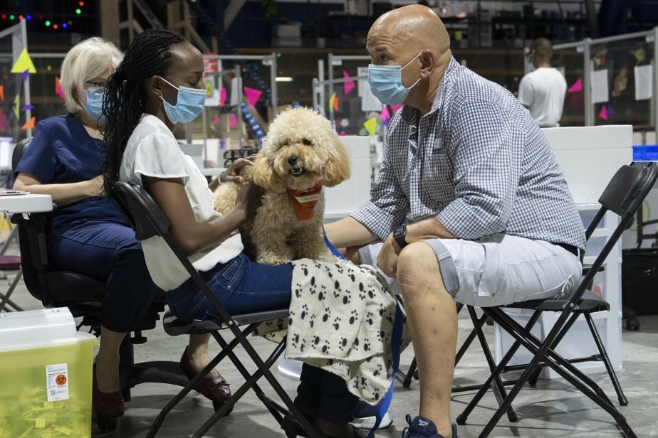 Des petits chiens aident à la vaccination de ceux qui ont des craintes
