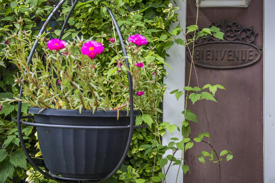 «Bienvenue» est le maître mot des lieux. Par ailleurs, la porte du garage a été condamnée par des plantes grimpantes, et le petit édifice est utilisé comme serre et atelier.