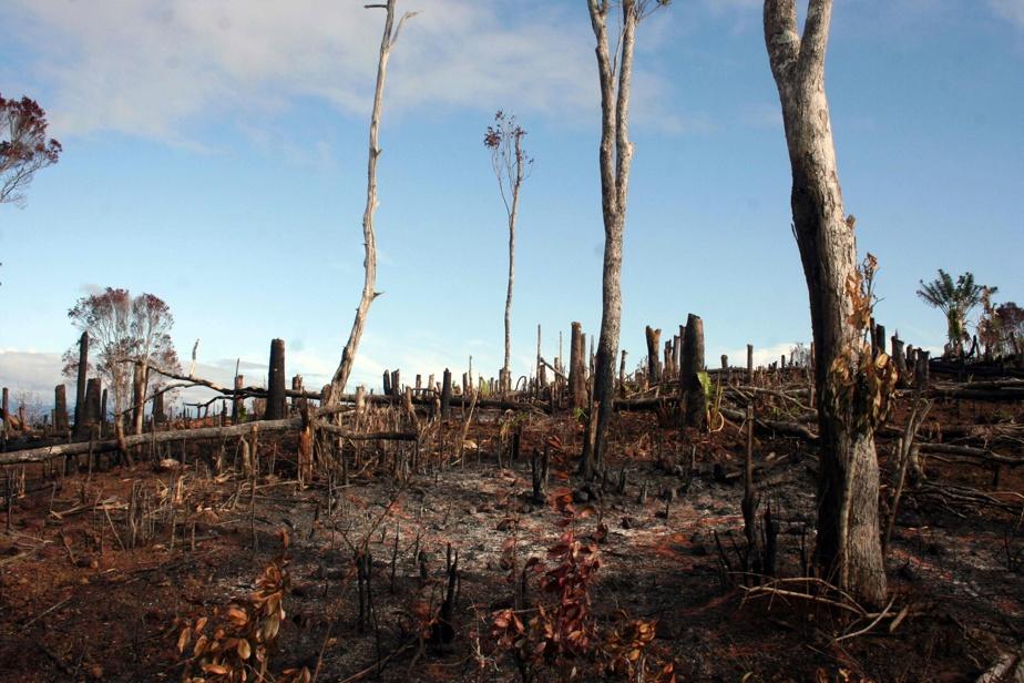 L'autre COP: L'urgence locale et mondiale en matière de biodiversité
