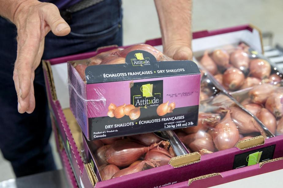Les contenants d'échalotes françaises prêts à être livrés à l'épicerie