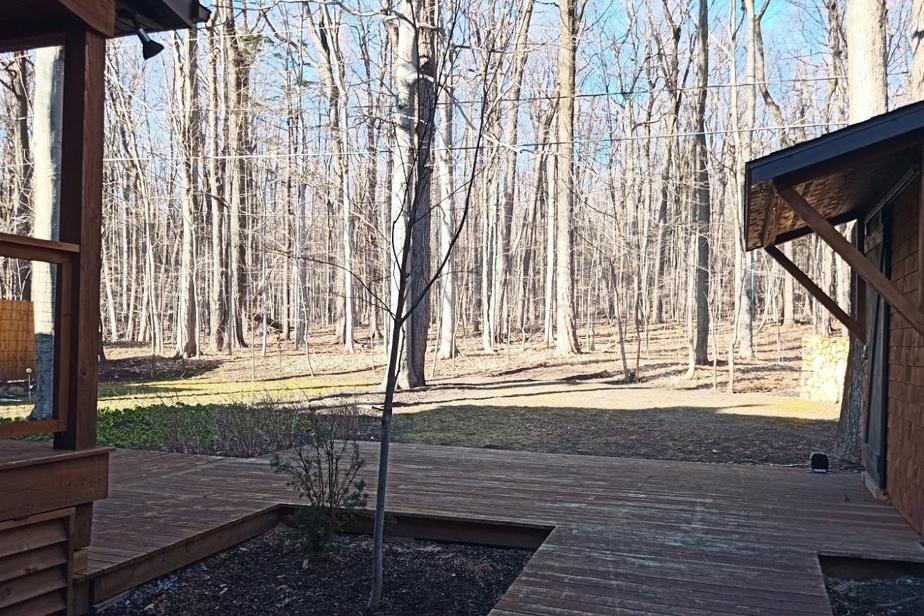 La cour arrière de cette propriété bénéficie d'un environnement très boisé. C'est l'un des atouts qui ont particulièrement séduit les nouveaux propriétaires.