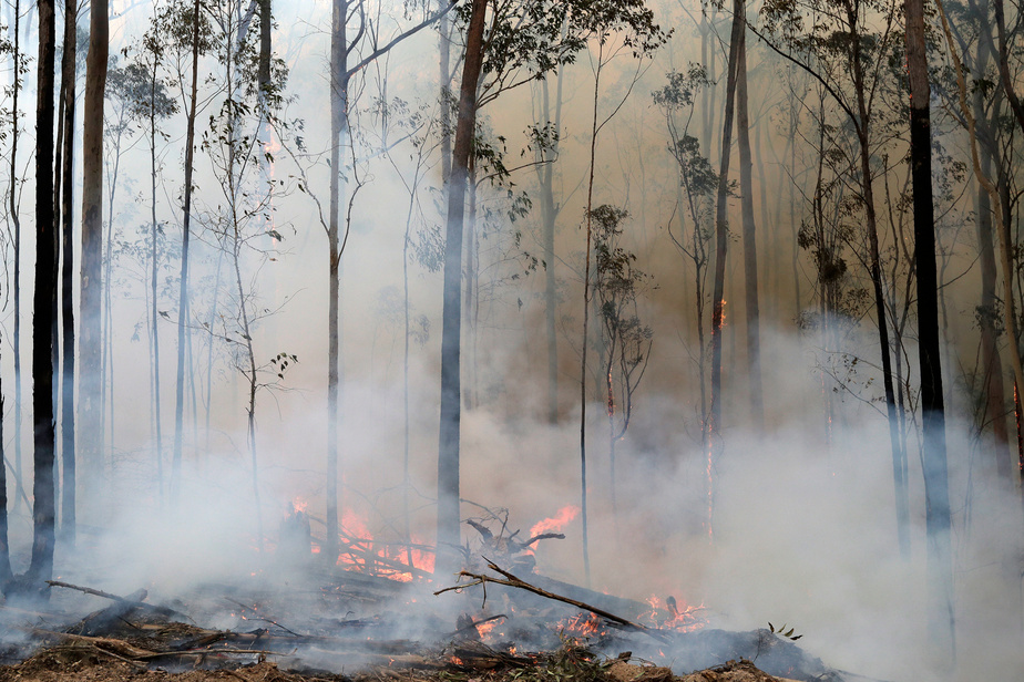 La capitale Canberra en état d'alerte — Incendies en Australie