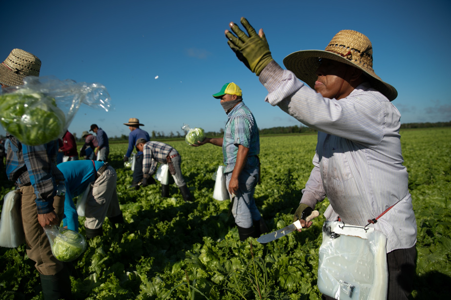 Agroalimentaire | Il faut vacciner les travailleurs étrangers d'abord, réclame l'UPA - La Presse