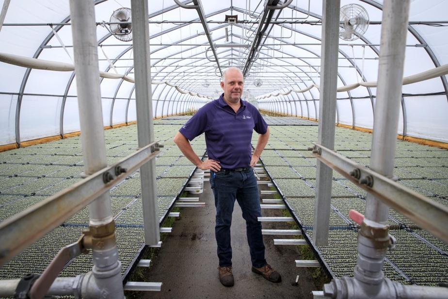 Stéphane Van Winden dans la serre où sont produits les semis de laitue qui seront plantés prochainement.