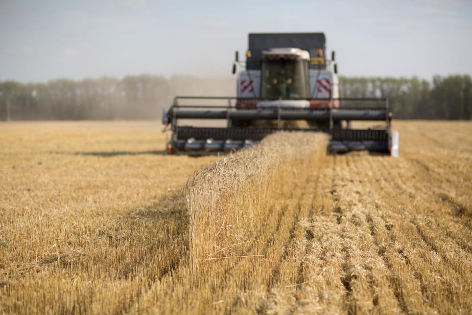 Récolte de céréales en baisse Les revenus du CN et du CP seront touchés par la sécheresse)