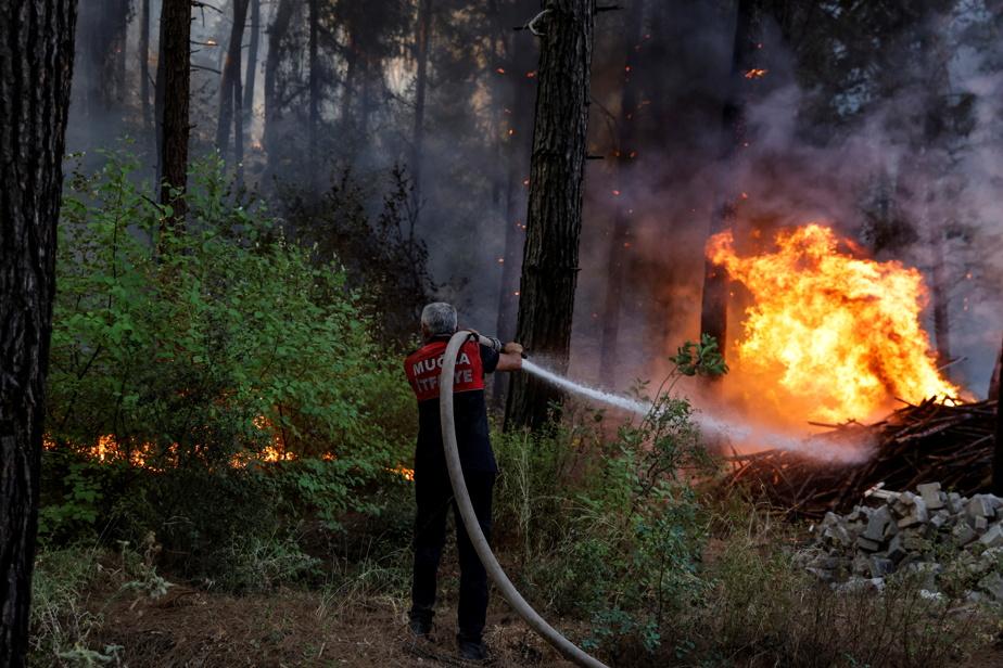 Les pompiers turcs poursuivent leur lutte contre les incendies de forêt)