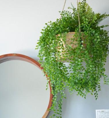 La qualité des plantes artificielles s'étant améliorée au cours des dernières années, celles-ci peuvent être suspendues à loisir. «Comme les plantes n'ont pas besoin d'être arrosées et ne nécessitent pas de lumière, elles peuvent être installées un peu partout», souligne Anick Thélusma, chargée de projet en marketing chez DécorsVéronneau.