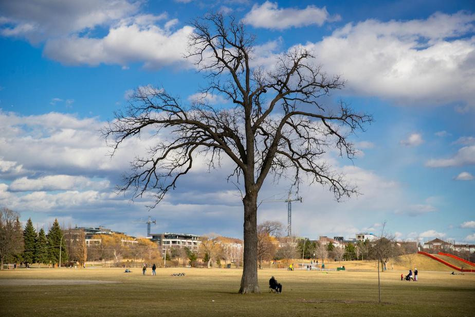 16h30: fin d'après-midi, au parc Jarry. Les rares promeneurs viennent humer le début du printemps en restant loin les uns des autres.