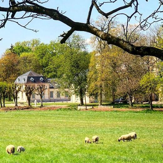 Neufmoutons et neufagneaux broutent l'herbe autour du château.