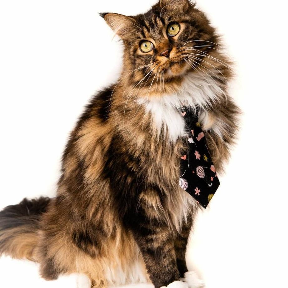 Fier Pet ose les cravates pour chiens et chats, avec des motifs souvent originaux.