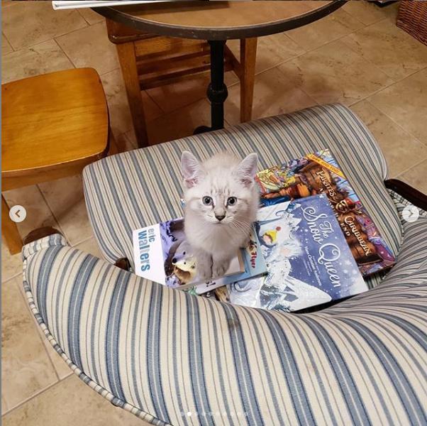 Ce chaton semble beaucoup apprécier la lecture de The Snow Queen, et on devine pourquoi.