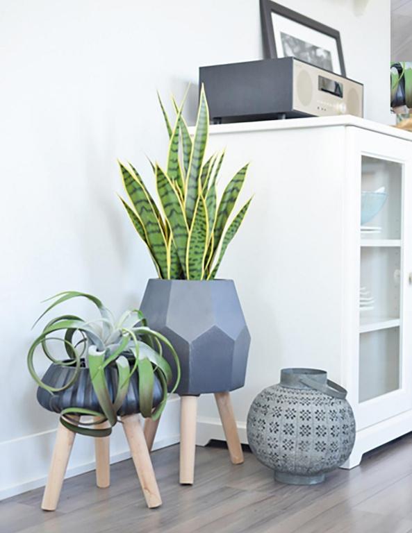 Des cache-pots, qui s'harmonisent ensemble et comportent des plantes différentes, habillent une pièce, indique Anick Thélusma, chargée de projet en marketing chez DécorsVéronneau. Le plus haut pot sur pattes (95$) contient une sansevière jaune et verte (230$), tandis qu'un tillandsia (35$) ajoute de la personnalité au second pot sur pattes (40$). Les deux plantes sont artificielles.