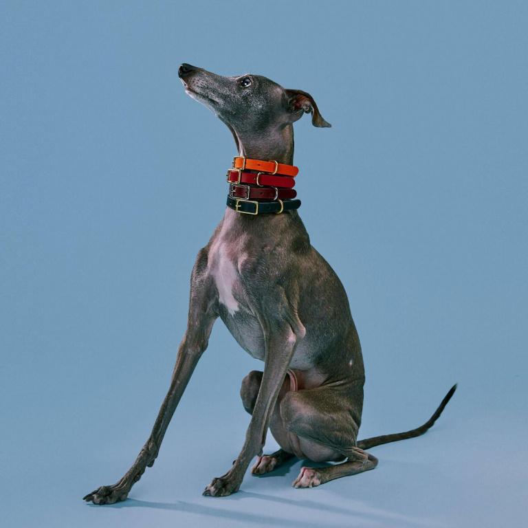 Les colliers sont proposés en plusieurs tailles, pour tous les formats de chien.