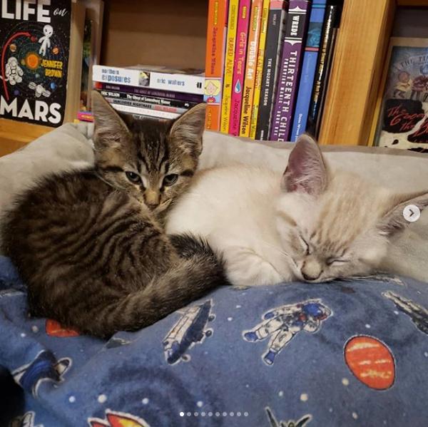 La librairie collabore avec une association locale de sauvetage des animaux.