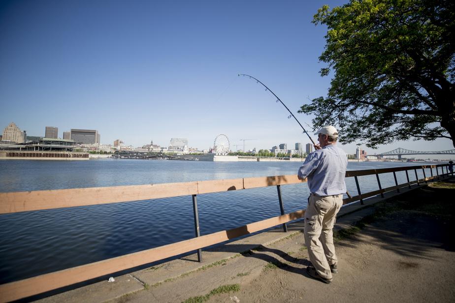Le parc de Dieppe, situé tout près d'Habitat67 dans la Cité du Havre, est populaire auprès des pêcheurs de Montréal. Il n'est pas rare d'en croiser beaucoup en même temps.