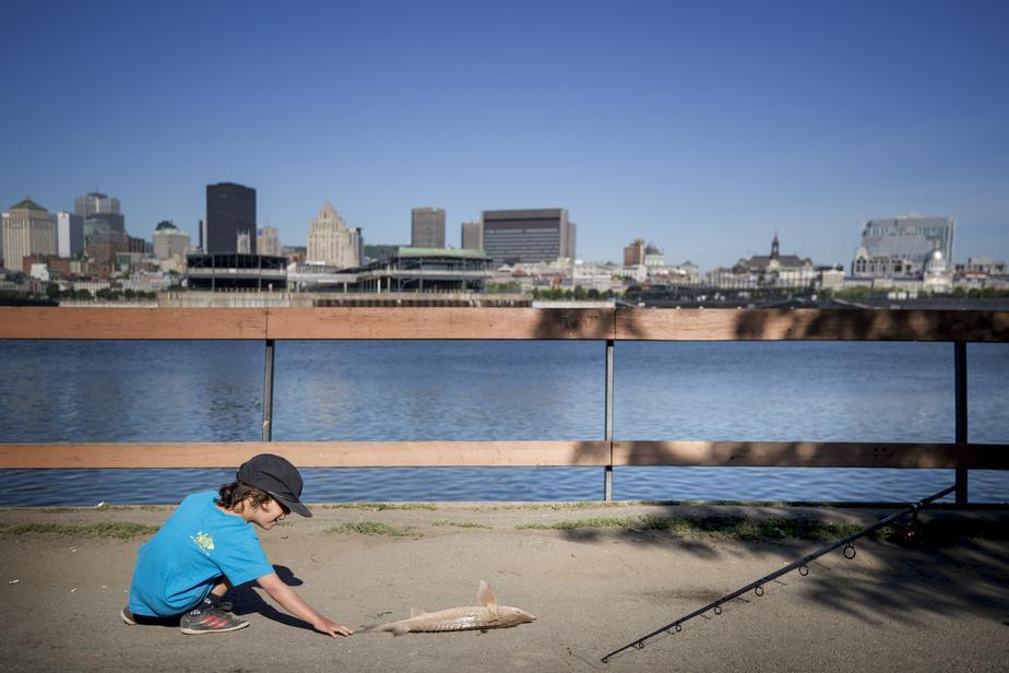 Le jeune Gabriel Larose vient observer l'esturgeon avant sa remise à l'eau.