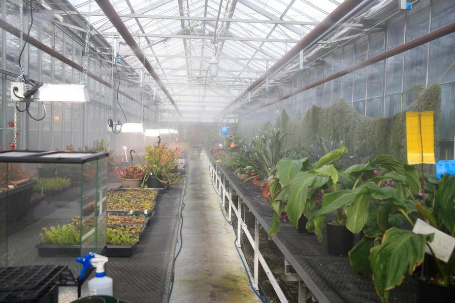 On est aux petits soins avec les plantes dans des serres en attendant le début de l'exposition.