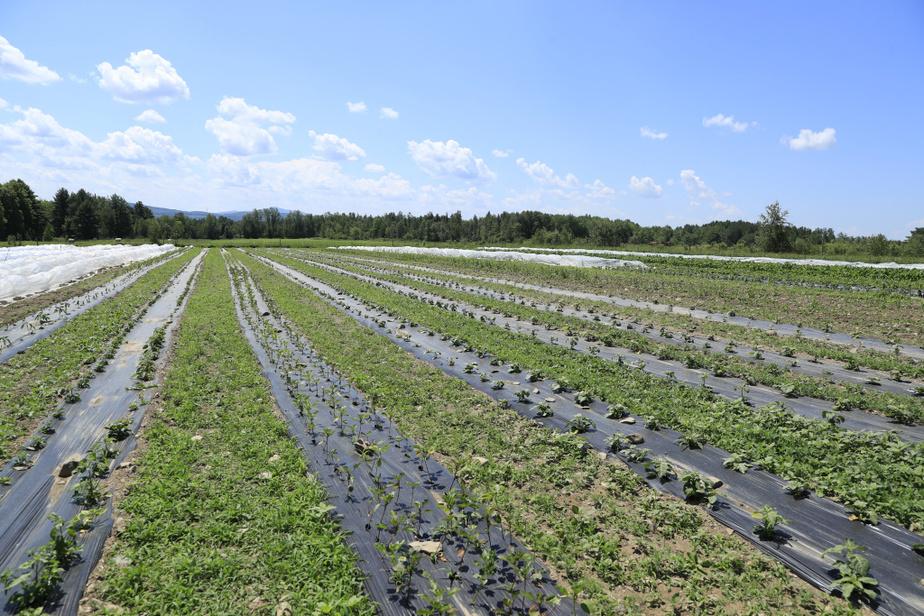 Edem Amegbo loue quatre acres de terre à East Farnham, près de Cowansville.