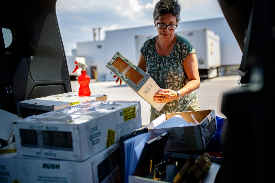 Avant la pandémie de COVID-19, les reines arrivaient toujours de l'étranger à bord de vols passagers d'AirCanada. Les choses se sont compliquées cette année. Les abeilles de Stannabey arrivent désormais de Californie grâce au service de courrier UPS.