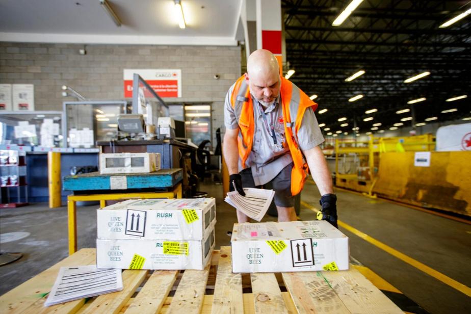 MartinNoël, préposé d'escale chez Air Canada Cargo, prépare les colis qui seront envoyés dans l'est du pays.