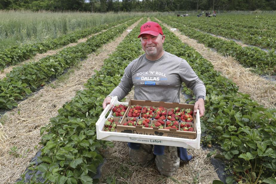 Richard Kapitan, 51ans - Embauché il y a quatre semaines, Richard Kapitan s'est joint au groupe de jeunes pour cueillir des fraises. Il a posé sa candidature au programme «J'y vais sur-le-champ» après avoir perdu temporairement son emploi comme chef de train au CN. La PCU? Non, merci. «Rester à la maison à ne rien faire, ça ne faisait pas partie de mes options.»