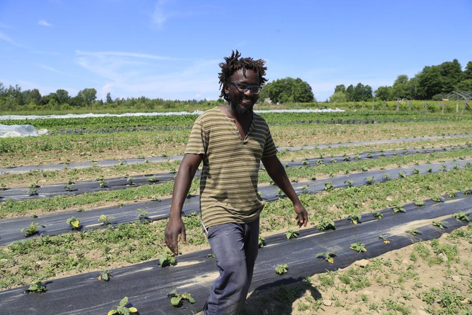 Edem Amegbo est heureux aux champs. Lors du passage de LaPresse, il espérait toutefois plus de pluie. «Je vis à Granby, et ça me choque de voir les gens arroser leur sol», dit le maraîcher, conscient de la valeur de l'eau.