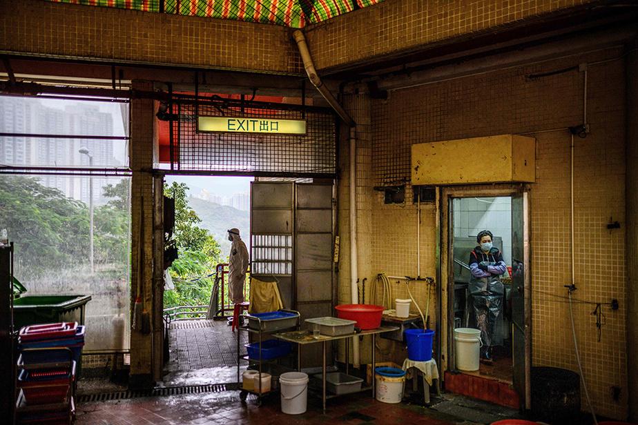 Les autorités hongkongaises se montrent extrêmement vigilantes quant aux nouveaux cas, du fait de l'extrême densité de population dans la mégapole de septmillions d'habitants.