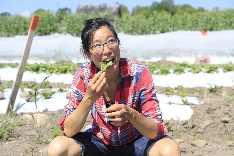 Stéphanie Wang n'a pas arrêté de travailler pendant la pandémie de COVID-19. «On est considérés comme un service essentiel, mais on n'a pas le même filet social que les travailleurs de la santé, observe-t-elle. Ce serait le fun d'avoir aussi des assurances médicales et un fonds de pension. Ça montre comment on considère l'agriculture dans notre société...»