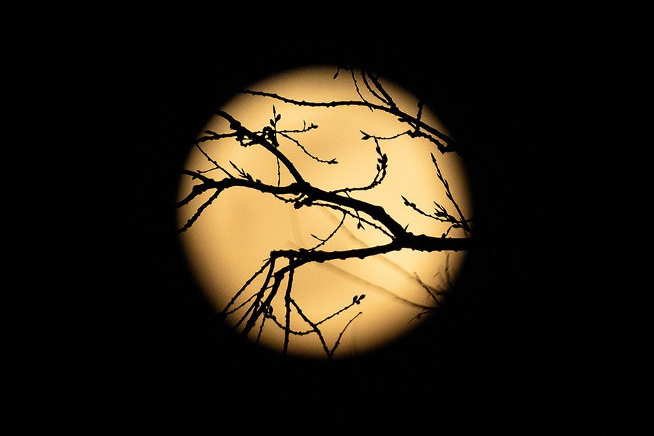 La super lune, vue à travers des branches d'arbre