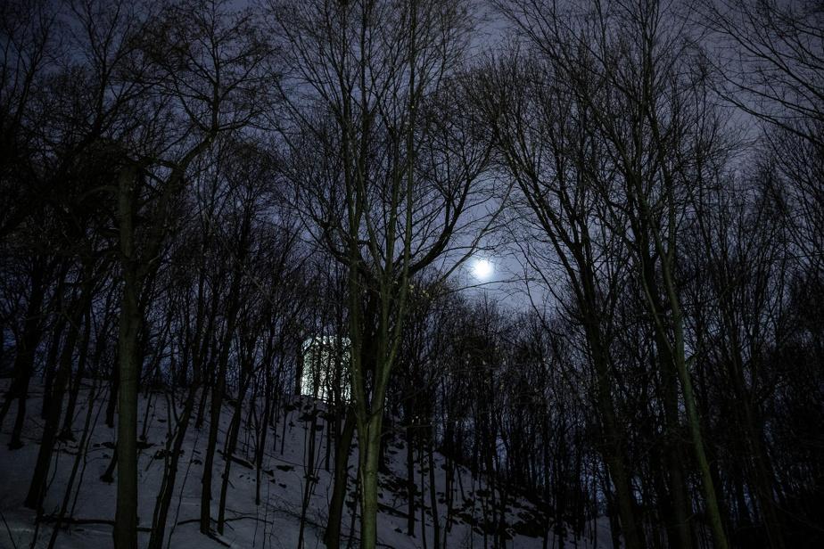 La tour de Lévis apparaît comme un spectre parmi les arbres, dans l'île Sainte-Hélène.