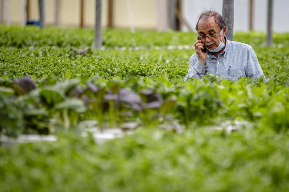 Le producteur agricole Whalid Takla s'est tourné vers la plateforme mise en place par Québec et l'Union des producteurs agricoles pour tenter de recruter des employés. «J'ai un besoin criant de main-d'œuvre et c'est pour cela que je me suis adressé à ce programme. Je les appelle tout le temps. Je les harcèle même un petit peu!»