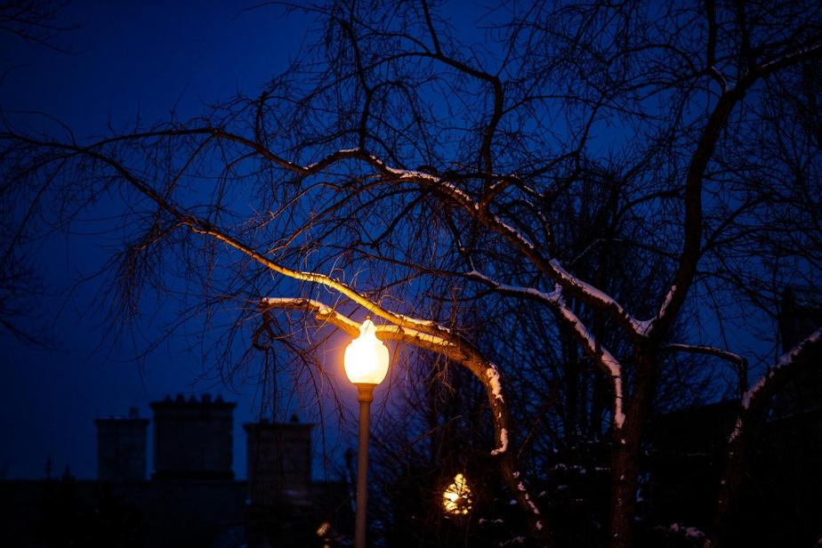 Des branches enneigées près d'un lampadaire à Westmount