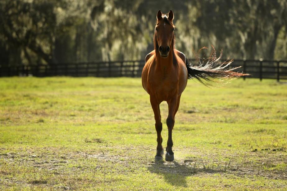 Les pur-sang d'Hennessey: près de la moitié (46%) des chevaux du comté de Marion sont des pur-sang. La ferme Hennessey Arabians est une pouponnière de chevaux arabes, reconnus pour leur beauté davantage que pour leurs capacités physiques.