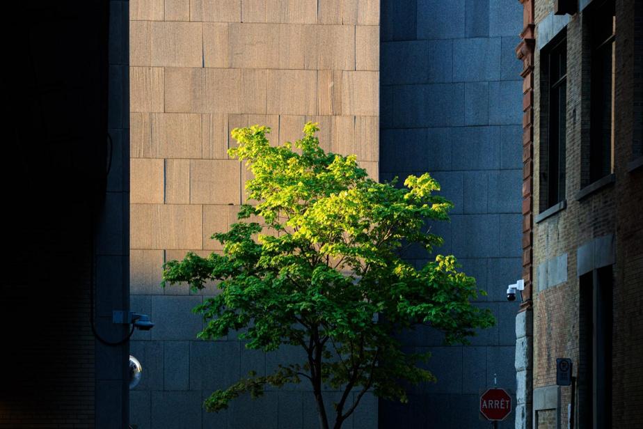 Lumière de fin de journée sur le boulevardSaint-Laurent, en face du palais de justice.