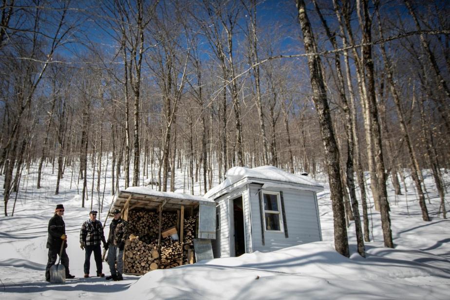 Avant d'installer sa petite cabane sur son terrain de Saint-Raymond il y a trois ans, Sylvain Bouchard a fait bouillir son eau d'érable conjointement avec celle de Marcel Hamel sur l'évaporateur de ce dernier.