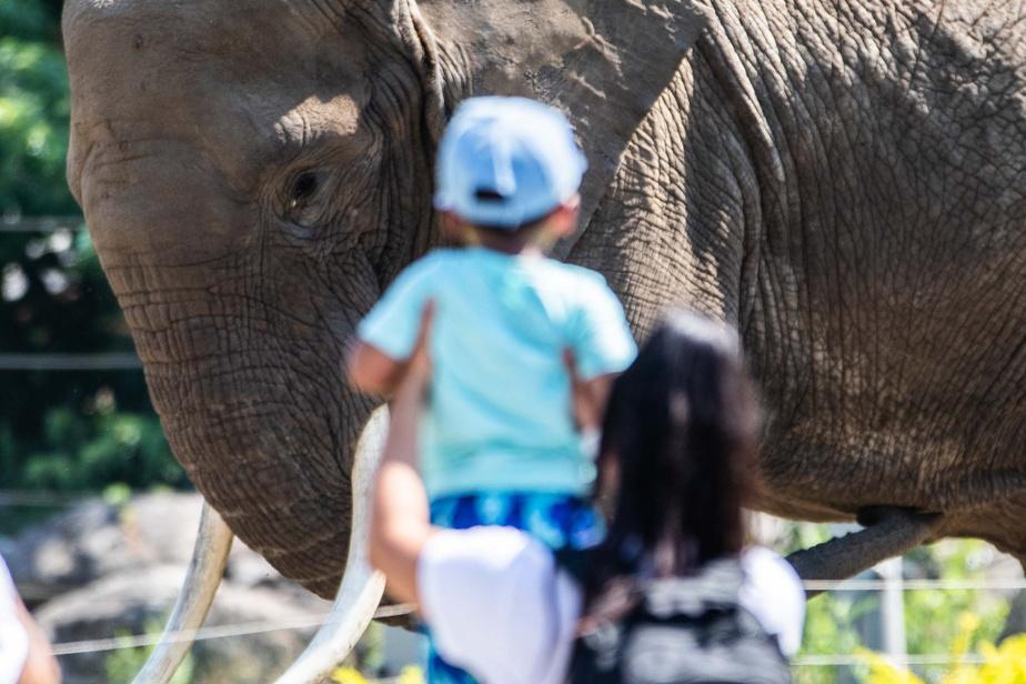 Une mère et son fils observent de près un éléphant.