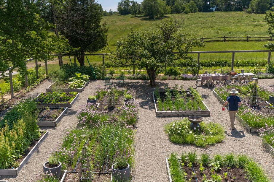 Maxime Vandal et Richard Ouellette ont choisi de faire pousser des fleurs. Des dahlias, des pois de senteur, des cosmos, des zinnias. Les fleurs de ciboulette, qui égaient aussi le jardin, aromatiseront le vinaigre que le couple compte produire.