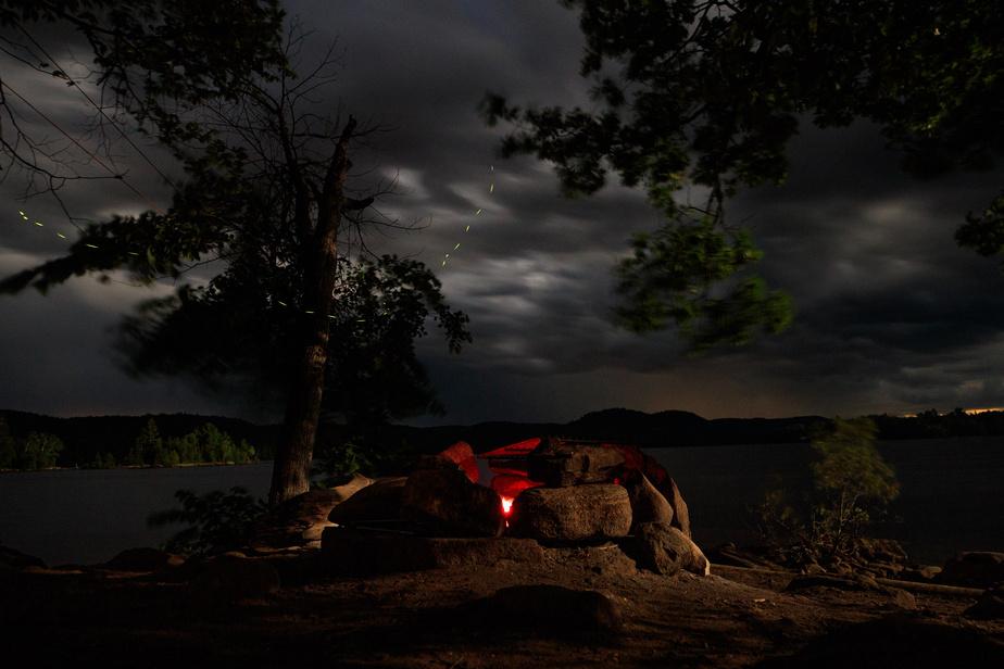 Est-ce que des lucioles sont visibles sur une photo? La réponse est oui!