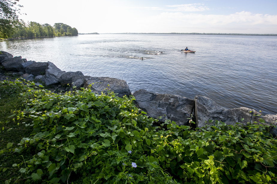 Le trio de nageurs et l'entraîneur, sur son kayak, ont longé la rive jusqu'à Dorval.