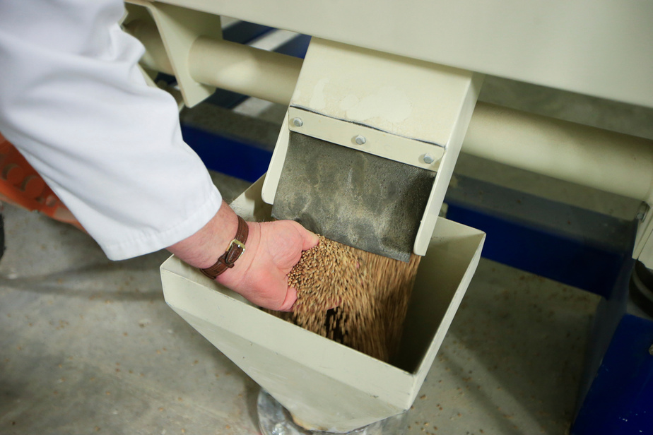 Le propriétaire montre les grains à leur arrivée à la meunerie.