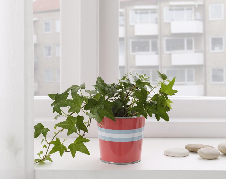 À l'approche du printemps, le besoin d'intégrer des couleurs vibrantes se fait sentir. La teinte corail apporte un élément amusant autant à l'intérieur qu'à l'extérieur, indique Heena Saini, spécialiste des relations publiques au niveau commercial, chez IKEA Canada. Modèle Kakiplommon en acier galvanisé, 1,49$.