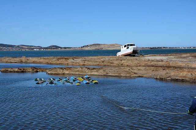 Avant d'utiliser leurs nouvelles cages, les pêcheurs les laissent tremper dans la baie, pour enlever l'odeur du bois qui pourrait repousser les homards.
