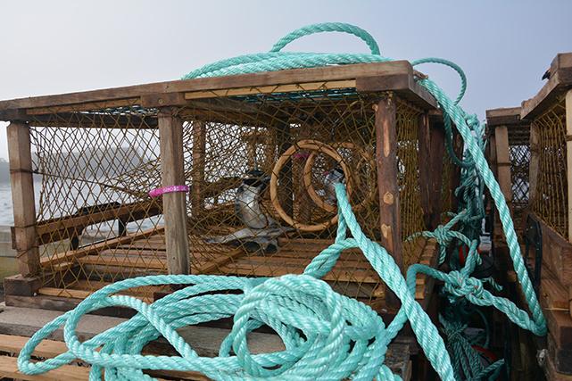 Toutes les cages sont « boëttées » : on y place des appâts pour attirer le homard. Chaque pêcheur a sa recette : plie, maquereau, hareng, sébaste…