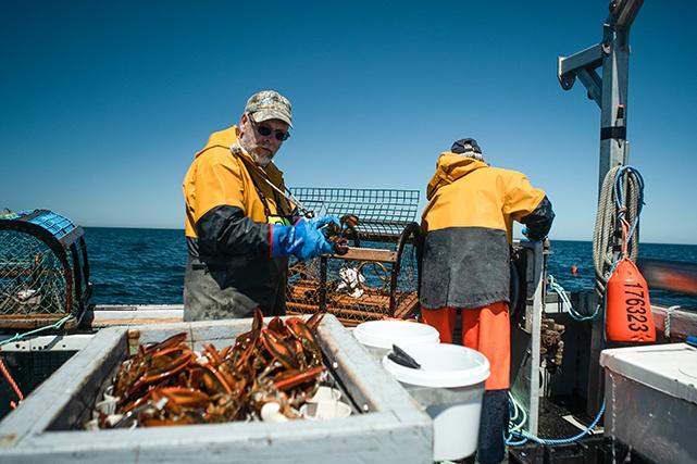 Chaque jour, pendant neuf semaines, on relève les 273 cages pour en sortir le homard tant attendu.