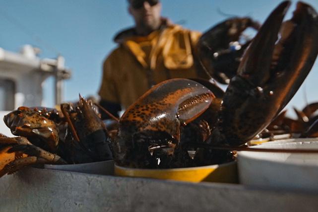 Aux Îles-de-la-Madeleine, la pêche au homard débute au printemps et dure neuf semaines.