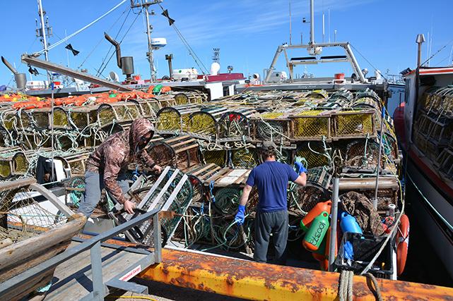 Les pêcheurs chargent ensuite sur leur bateau leurs 273 cages respectives. Si certains ont d'assez gros bateaux pour les embarquer au complet, d'autres devront faire deux voyages le matin du grand jour pour aller les porter en totalité en mer.