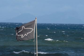Selon une étude  Les requins confondent les surfeurs avec leurs proies animales